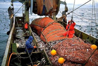 Des droits de propri t sur les ressources halieutiques for Comgres ceram pleine masse