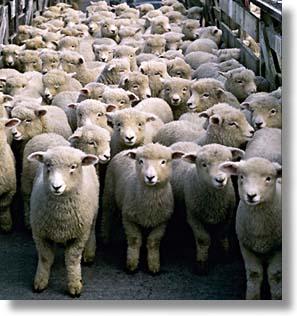 Gobe Mouton en 1835 dans MOUTON moutons